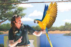 Zoo Wild Life Stage Show at the Sacramento Zoo. Courtesy of Sacramento Zoo