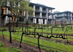 A room at Las Alcobas in St. Helena comes with a great and grape neighbor: Beringer's home vineyard. Photo by David Dickstein